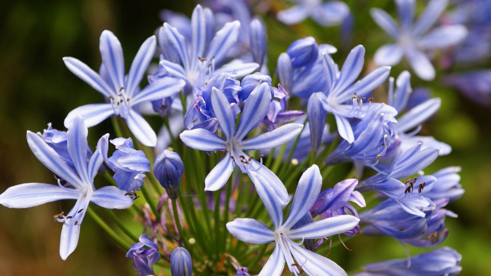 Blütenlandschaft Madeira