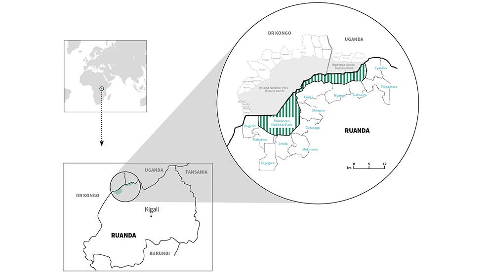 Im Herzen Afrikas befindet sich eines der allerletzten Rückzugsgebiete der Berggorillas